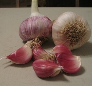OG German Red Garlic