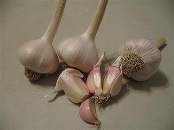 OG Music Garlic